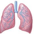 Akciğer Enfeksiyonu Belirtileri