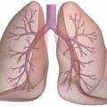 Akciğerlere Faydalı Besinler