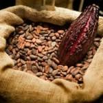 Basura iyi gelen bitkileri kakao yağı ile karıştırarak krem haline getirebilirsiniz.
