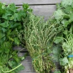 Bazı bitkiler sindirimi düzenleyerek basur  tedavisine yardımcı olur.