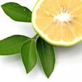 Bergamot Çayı Faydaları, Hazırlanışı ve Yan Etkileri