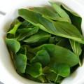 Yeşil Çay Yağı Ne İşe Yarar?