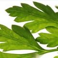 Böbrek Taşı İçin Şifalı Bitkiler