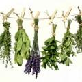 Damar Tıkanıklığı İçin Şifalı Bitkiler