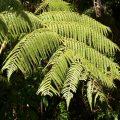 endemik-bitki