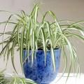 İç Mekan Süs Bitkilerinin Küflenmesi