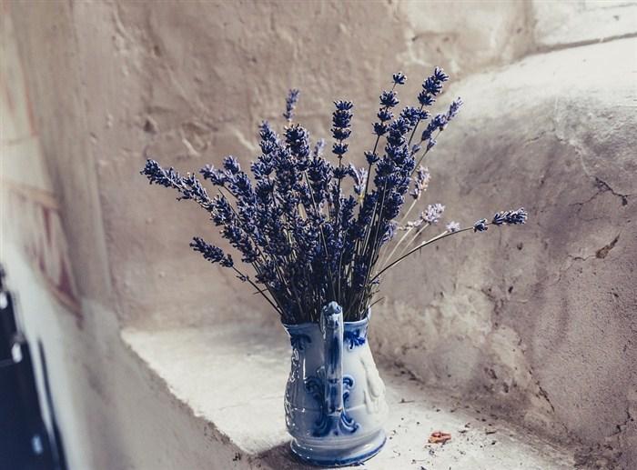 Saksıda lavanta çiçeği